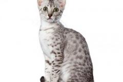 cat_egyptianmausilver_400x378
