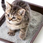 Le bac à litière du chat