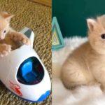 Bébés chats - Mignons et drôles de chats Compilation vidéo n°37 | Aww Animals