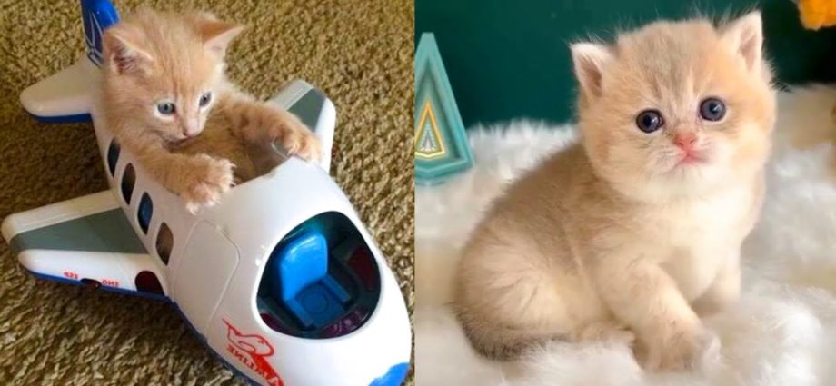 Bébés chats - Mignons et drôles de chats Compilation vidéo n°37   Aww Animals