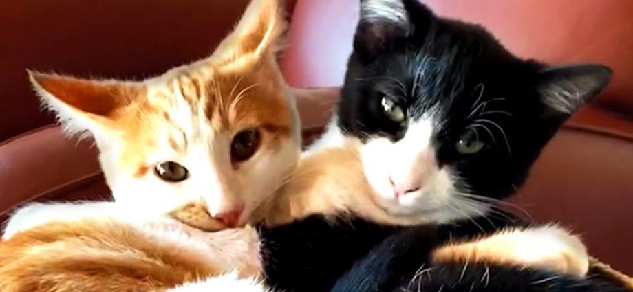 Les vidéos de chats à regarder absolument ! Chats mignons et drôles 🐈