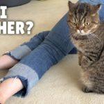Que feront mes chats si je meurs ? | Kittisaurus