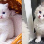 Bébés chats - Mignons et drôles de chats Compilation vidéo n°34 | Aww Animals