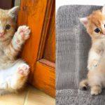 Bébés chats - Mignons et drôles de chats Compilation vidéo n°35 | Aww Animals