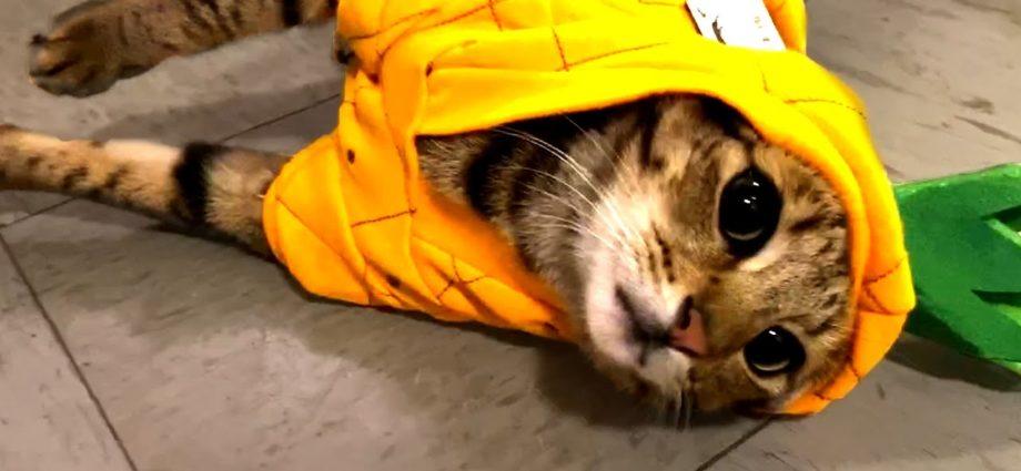 Les vidéos de chats à regarder absolument ! Chats mignons et drôles 🐱