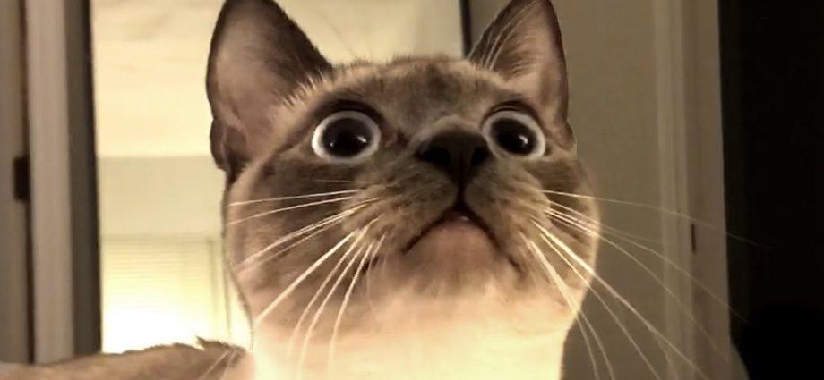 Les meilleures vidéos de chats mignons et drôles cette semaine ! 🐱