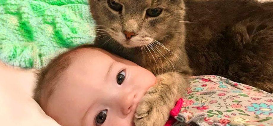 Bébé et chat : amusement et échecs - Vidéo drôle de bébé
