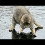 Vous allez rire si fort que vous en aurez l'air - compilation FUNNY CAT