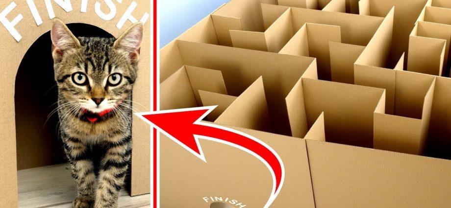 Labyrinthe géant pour chatons. Peuvent-ils sortir ?