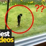 Vidéos hilarantes sur les virus des chats | Ultimate Cat Compilation 2019