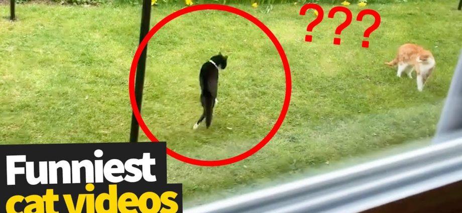 Vidéos hilarantes sur les virus des chats   Ultimate Cat Compilation 2019