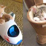 Bébés chats - Mignons et drôles de chats Compilation vidéo n°21 | Aww Animaux
