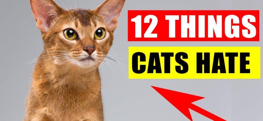 12 choses que les chats détestent le plus