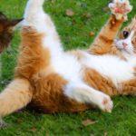 🤣 Le plus drôle 🐶 Chiens et 😻 Chats - Vidéos d'animaux domestiques géniales 😇