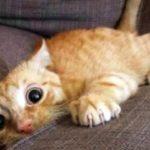 Funny Cats ✪ Compilation de vidéos de chats mignons et de bébés chats #85