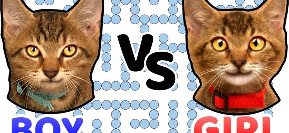 FILLE contre GARÇON dans WATER MAZE. Quel chaton est le plus intelligent ?