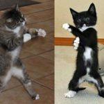 Funny Cats ✪ Compilation de vidéos de chats mignons et de bébés chats #73