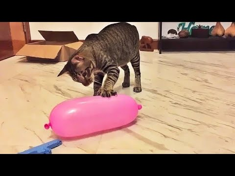 drôle de Chats VS Ballons
