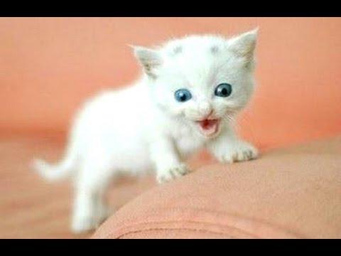 Compilation des miaulements des chats et chatons en 2015 || NOUVEAU