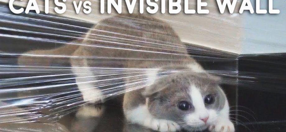 Chats vs Compilation de murs invisibles
