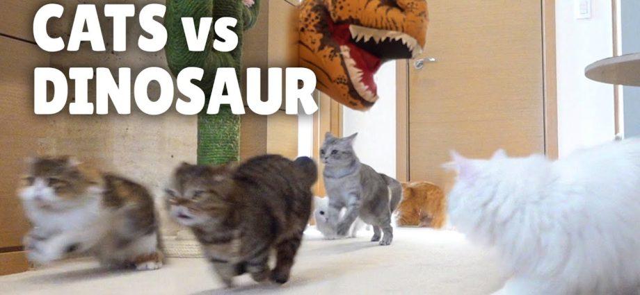 Chats contre dinosaure | Kittisaurus