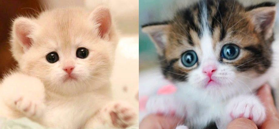 Bébés chats - Mignons et drôles de chats Compilation vidéo n°27 | Aww Animals