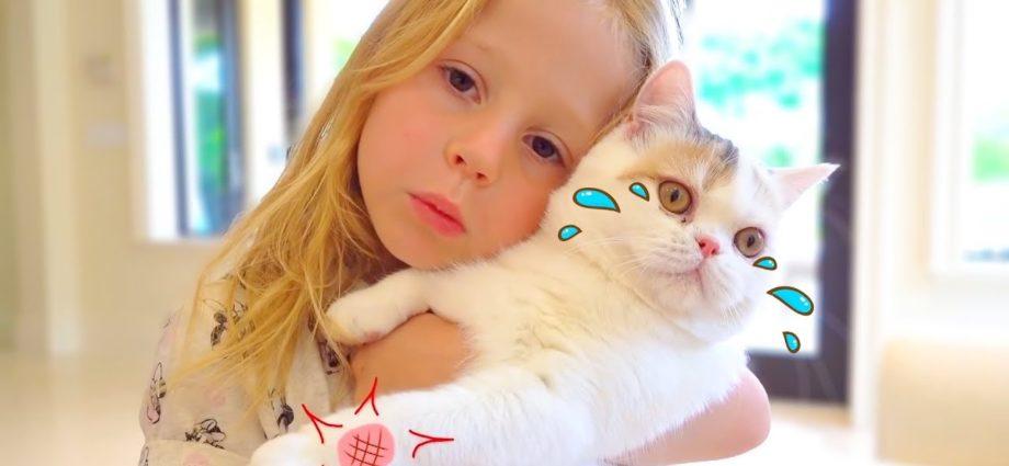 Stacy et les meilleures histoires de chats pour les enfants