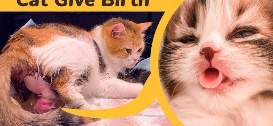 Une chatte donne naissance à 5 chatons de couleur complètement différente