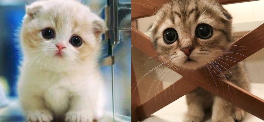 Bébés chats - Mignons et drôles de chats Compilation vidéo n°8 | Aww Animals
