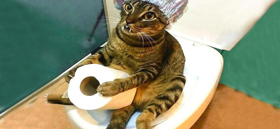 🐶 Chiens et 😹 Chats dans des situations amusantes - Essayez de ne pas rire 😂