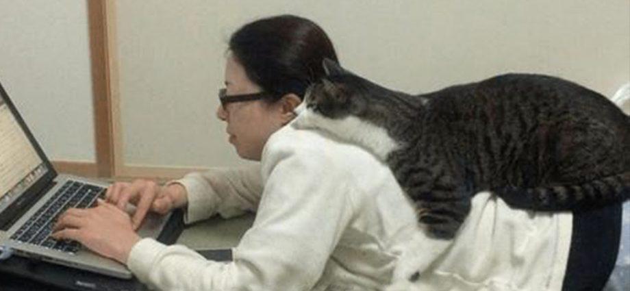 Avoir l'amour d'un chat, c'est avoir le monde - Les mignonnes actions d'un chat qui s'est lié à son maître