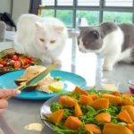 Les chats réagissent au fait que je mange devant eux