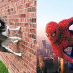 Essayez de ne pas rire avec les animaux - Compilation amusante sur les chats et les chiens