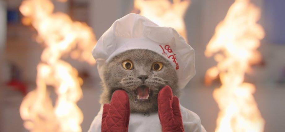 L'émission de cuisine pour chats 2