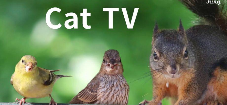 Cat TV 2020 : 8 heures - Des oiseaux à regarder pour les chats, détendre vos animaux, de beaux oiseaux, des écureuils.