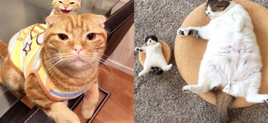 Bébés chats | Compilation de vidéos de chats mignons et drôles #91 | Cute Cats Land