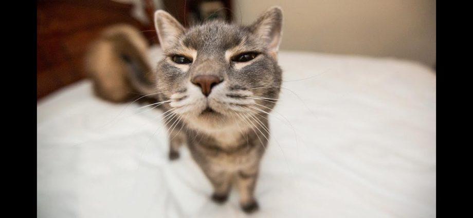 Compilation de chats drôles (les plus populaires) Partie 1