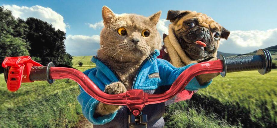 Voyage en voiture avec un chat et un chien