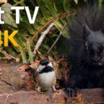 Vidéos pour Chats et Chiens : 8 heures d'oiseaux et d'écureuils - 4K UHD