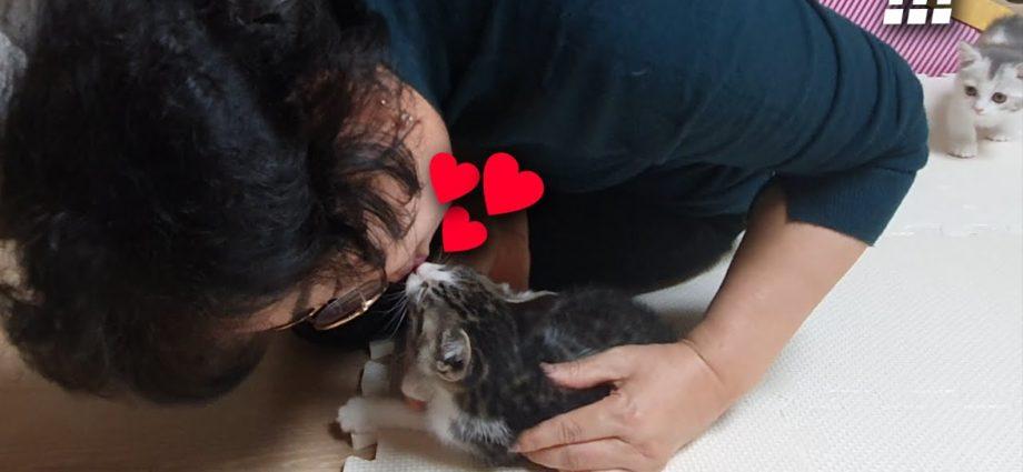 Ma mère, qui détestait les chats, embrasse maintenant les chats... !