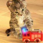 Little Kitten My Favorite Cat - Jouez à des mini-jeux amusants sur les soins aux animaux des chatons pour les enfants.