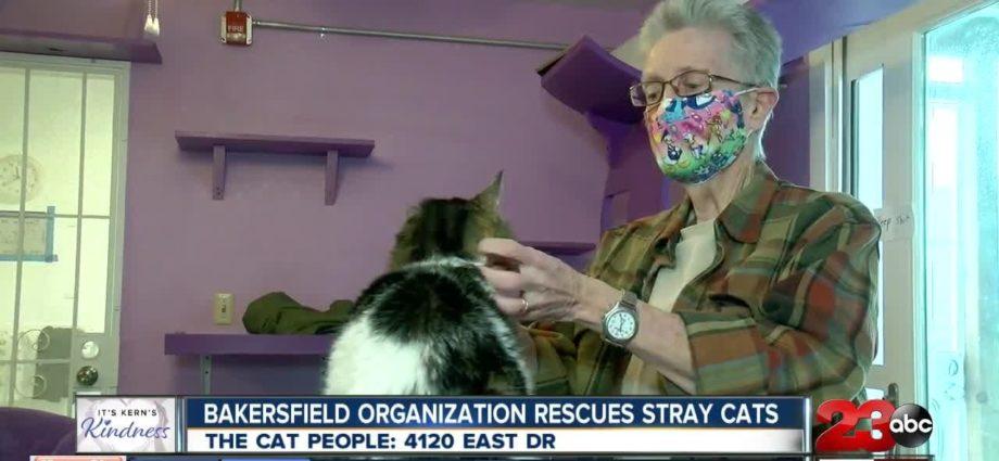 Kern's Kindness : The Cat People et le Sanctuaire Pawsitively Cats