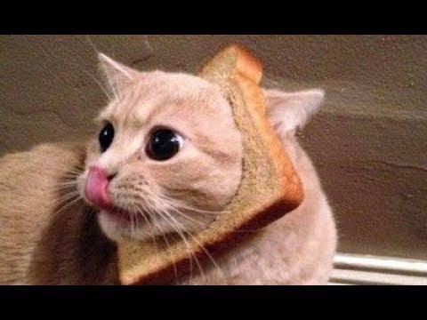 Vous aurez des larmes dans vos yeux de rire - La compilation des chats les plus amusants