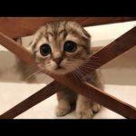 Essayer De Ne Pas Rire - Vidéos Drôles de Chats et de Chiens #27