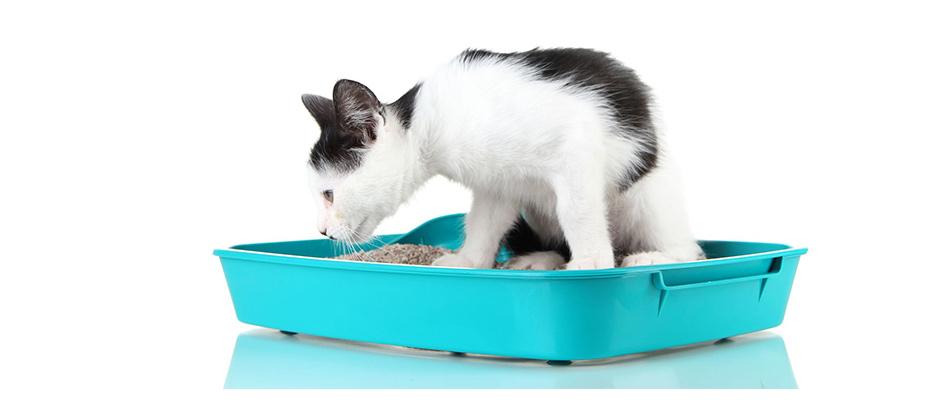 Votre chaton refuse d'utiliser sa litière ?