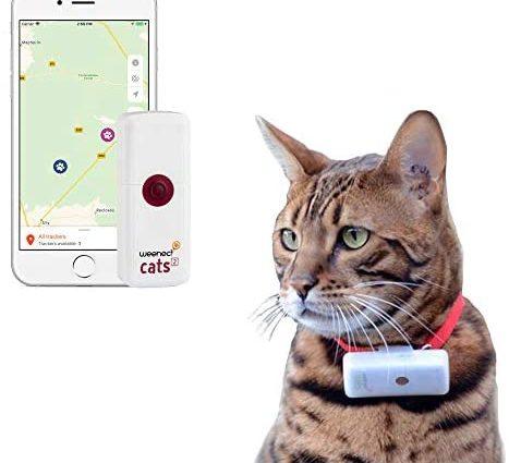 Weenect Cats 2 - Le plus petit collier GPS pour chat au monde