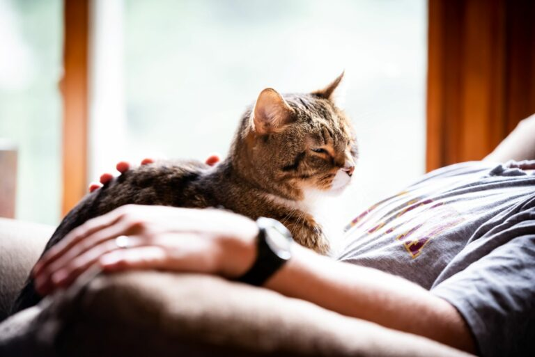Ce qui rend les chats différents des autres animaux