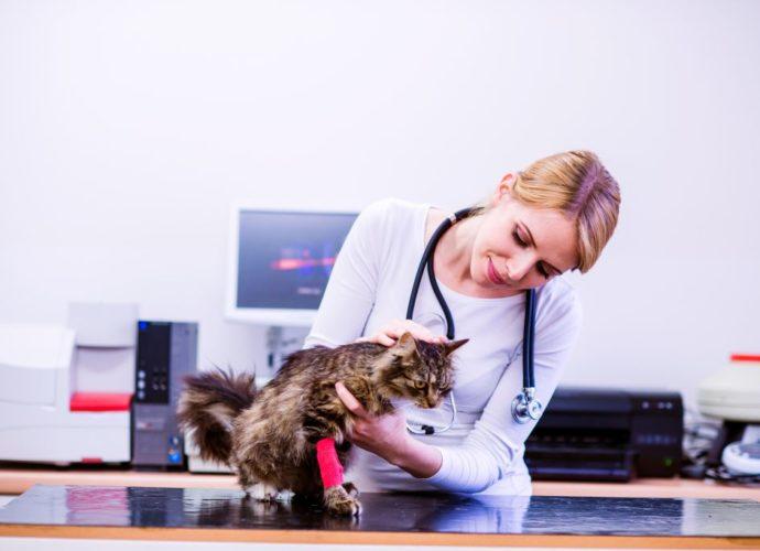 Les maladies courantes du chat