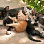 Comment la chatte s'occupe-t-elle de ses chatons nouveau-nés ?