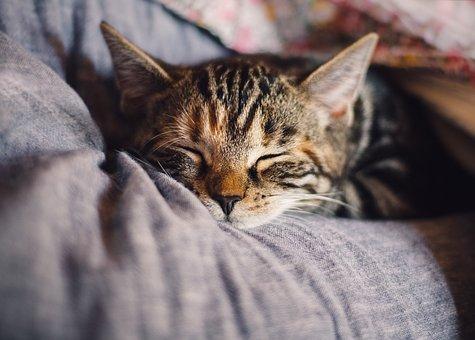 Comment dresser un chat adulte comme un professionnel ?